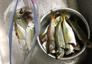 【釣り/外房】10月・良型アジが連発。秋の地磯カゴ釣り。